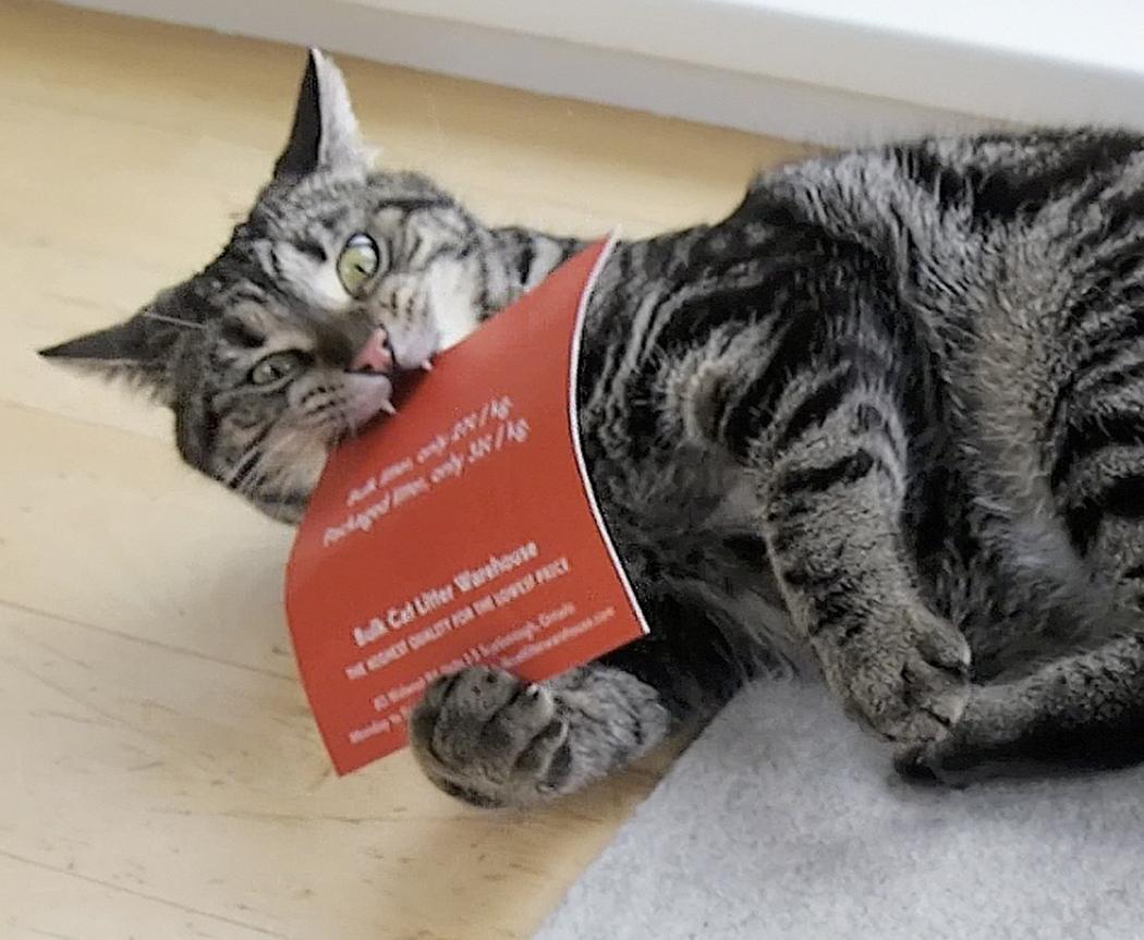 Where to buy cat litter in bulk