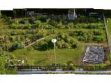 Urban greenery 1