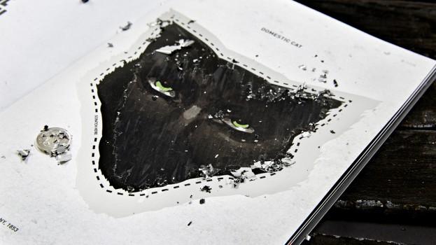 Black Cat5